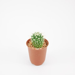 The little green cactus in small brown plant pot for home decoration.
