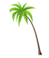 Wall Mural - Coconut palm tree on white background, vector illustration
