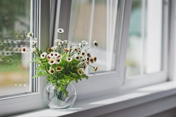 Small white flowers on a light windowsill 5057.
