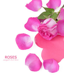 Beautiful rose bunch isolated on white background with hearts. Valentine's day concept. Love concept. Wedding,concept