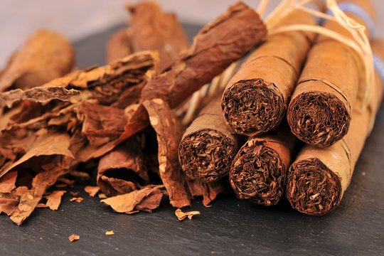 Dry tobacco leaves and cigars