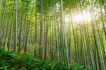 Groen bamboebos in de zomer