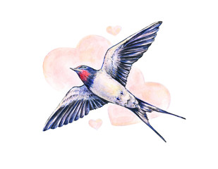 Beautiful swallow. Watercolor illustration. Spring bird brings love. Handwork
