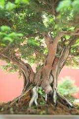 Tronco di Bonsai presso Euroflora