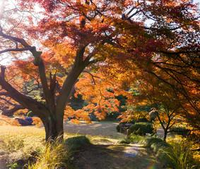 Autumn leaves in the Japanese garden.