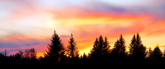 Panorama of a colorful sunset behind silhouetted forest trees in Alaska