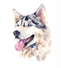 Watercolor sheepdog with wise look