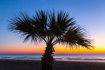 palm tree silhouette on a sunset background