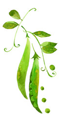 watercolor green peas