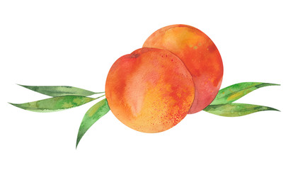 two peaches and leaves
