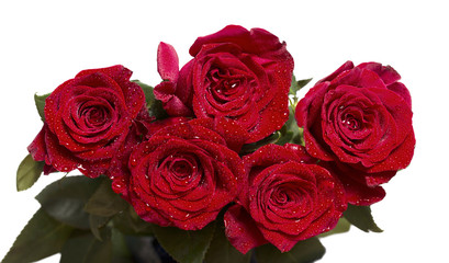 Five dark red roses with water drops on petals