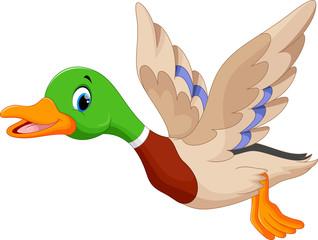 Cartoon flying duck