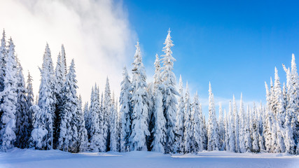 Wall Mural - Winter landscape on the mountains with snow covered trees and ski runs on a nice winter day under beautiful skies at the village of Sun Peaks in the Shuswap Highlands of central British Columbia