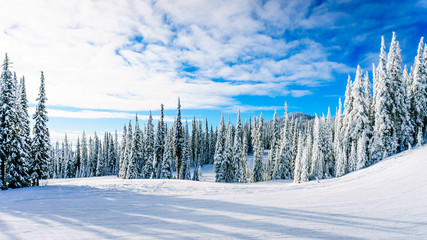 Winter landscape on the mountains with snow covered trees and ski runs on a nice winter day under beautiful skies at the village of Sun Peaks in the Shuswap Highlands of central British Columbia