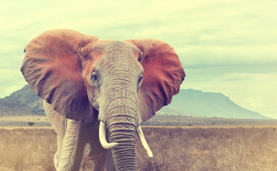 Wild african elephant. Vintage effect