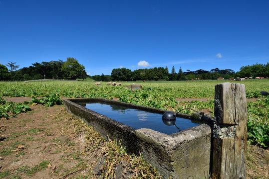A livestock water trough