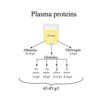Plasma proteins. Albumin. Fibrinogen. Globulin. Infographics. Vector illustration
