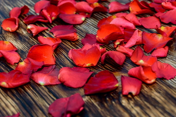 rose petals on wooden background