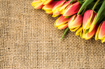 Tulips on jute. Background with copy-space.