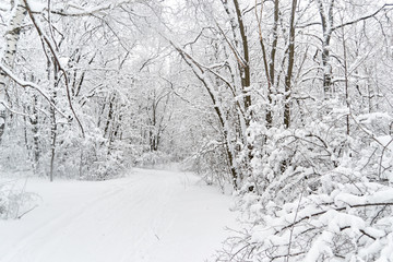 trees in the snow along the road