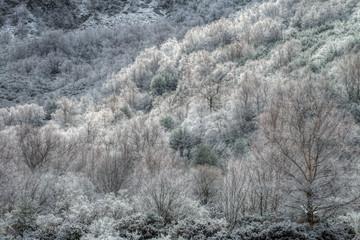 El bosque blanco