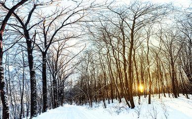 Panorama of the sunset in the frozen forest
