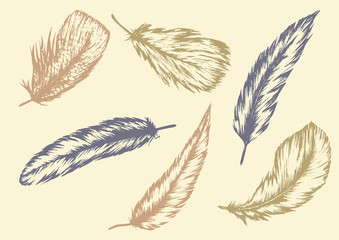 Hand drawn of Feathers.Vecter and illustration.