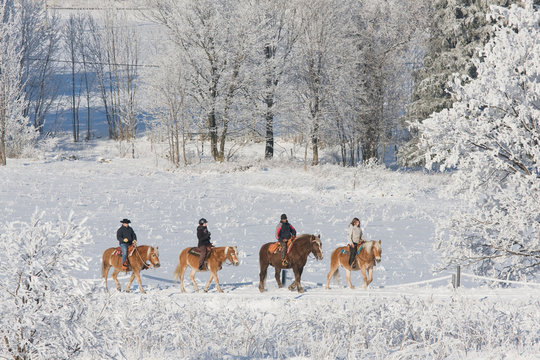 Four riders on horses walking through snowy landscape