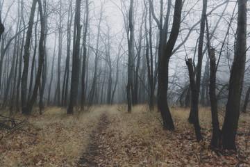 Autumn beautiful forest nature landscape in haze fog