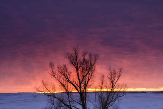 Winter nature landscape. Silhouette of tree at sunset