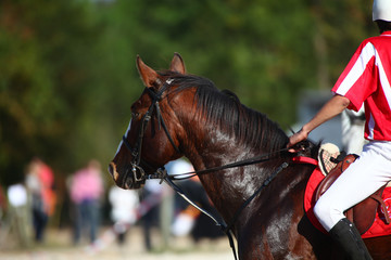 Cheval de horseball