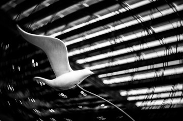 flying white bird sculpture