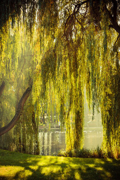 park with pond and willow trees
