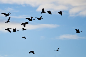 Flock of Geese Silhouetted in the Cloudy Sky