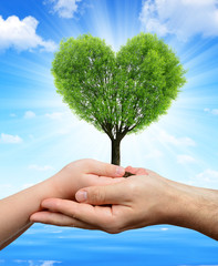 Child and male hands holding a tree in the shape of heart