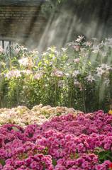 Flower garden with sunlight