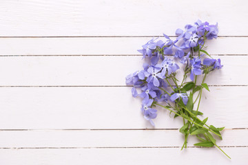 Fresh tender blue flowers on white wooden planks.