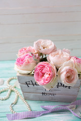Pink roses in wooden pot  on turquoise background against white wall.  Selective focus. Place for text..