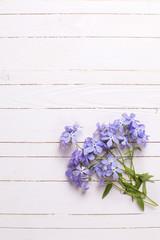 Fresh tender blue flowers on white wooden background.