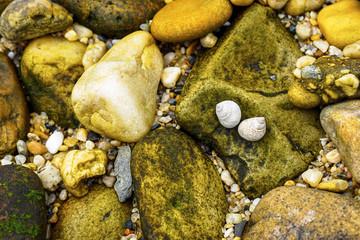 Sea Snail Couple