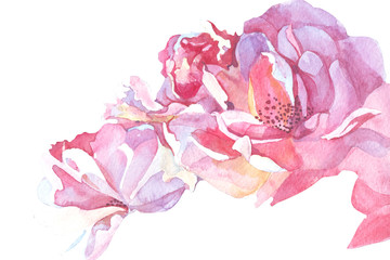 pink background watercolor illustration