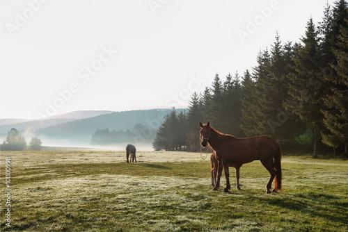 Лошади в поле  № 2021229 загрузить