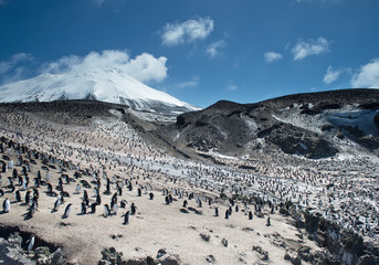 Huge colony og Macaroni penguins with snowy mountain and blue sky in the background, Zavodovski Island, Antarctica