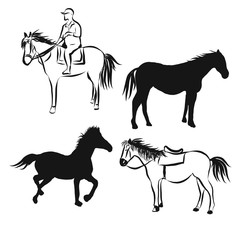 horse vector white background
