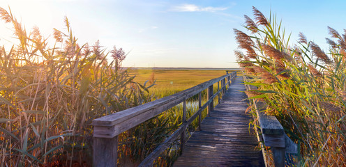 wooden bridge leading into the swamp