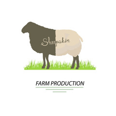 Illustration of sheep. Sheepskin and farm production, vector.