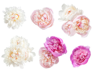 Set of peonies flower