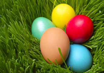 Easter eggs on green spring grass