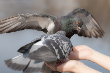 Two doves on the palm