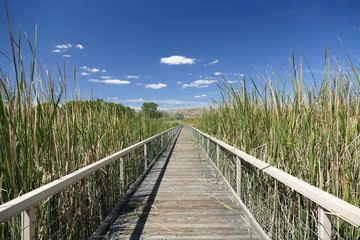 Long Wooden Boardwalk with Blue Sky and Reeds